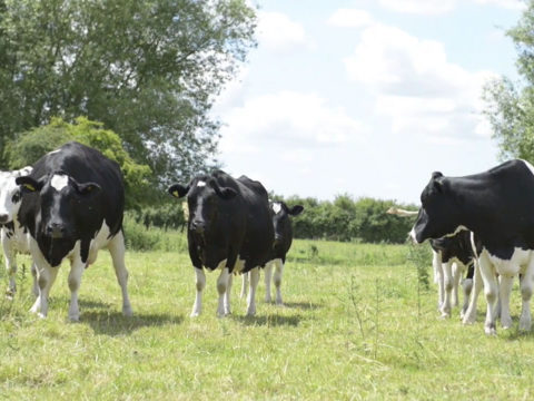 Sum-It herd management software case study video production